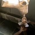 arte-com-tronco-de-madeira-cavalo