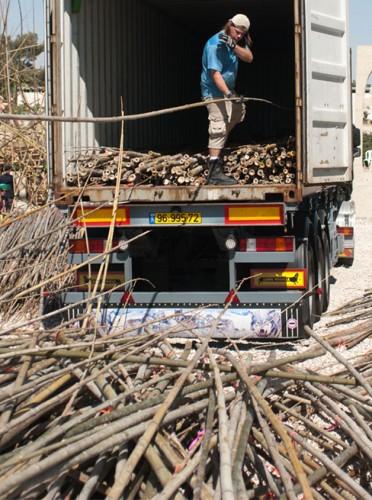 big-bambu 3