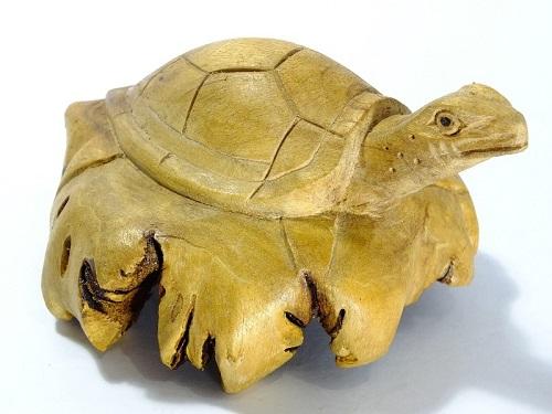 design inspirado nas tartarugas marinhas 08
